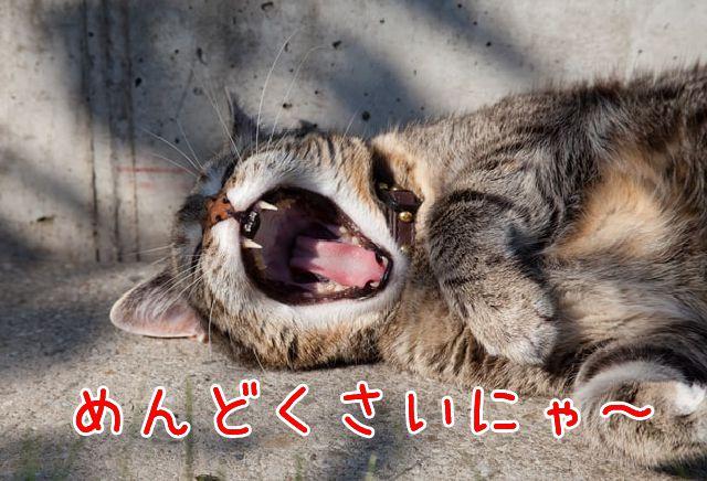 めんどくさがる猫