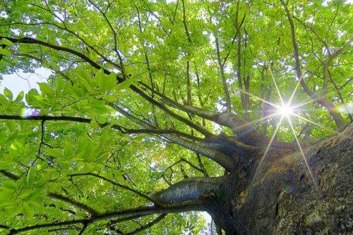太陽に照らされる大木