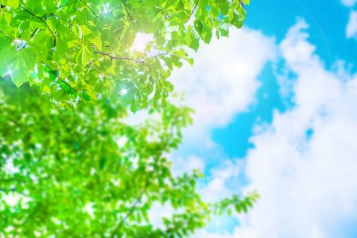 爽やかな木と青い空